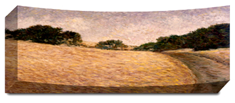 Honey Field - Panoramic